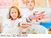 Schüler im Biologie Unterricht der Grundschule erforschen das Verhalten von Mäusen. Стоковое фото, фотограф Zoonar.com/Robert Kneschke / age Fotostock / Фотобанк Лори
