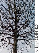 Ein Baum ohne Blätter im Winter. Symbolfoto für Netzwerke. Стоковое фото, фотограф Zoonar.com/Erwin Wodicka / age Fotostock / Фотобанк Лори