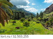 Üppige Ebene mit Bäumen im Tal auf Gran Canaria. Стоковое фото, фотограф Zoonar.com/Robert Kneschke / age Fotostock / Фотобанк Лори