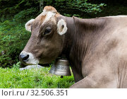 Cow with cowbell in the mountains of Appenzell, Switzerland. Стоковое фото, фотограф Zoonar.com/Daan Kloeg Photography / easy Fotostock / Фотобанк Лори