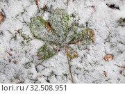 Зеленый опавший с дерева лист под первым снегом в парке. Стоковое фото, фотограф Николай Винокуров / Фотобанк Лори