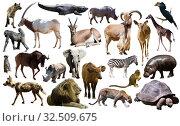 Birds, mammal and other animals of Africa isolated. Стоковое фото, фотограф Яков Филимонов / Фотобанк Лори