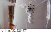 Купить «halloween decoration of black toy spider on cobweb», видеоролик № 32526971, снято 14 ноября 2019 г. (c) Syda Productions / Фотобанк Лори