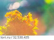 Купить «Close-up shot of the beautiful flowers. Suitable for floral background.», фото № 32530435, снято 21 января 2020 г. (c) easy Fotostock / Фотобанк Лори
