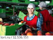 Купить «Young woman holding peaches during sorting to crates and checking quality at warehouse on factory», фото № 32536151, снято 12 декабря 2019 г. (c) Яков Филимонов / Фотобанк Лори