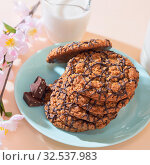 Купить «Healthy vegetarian cereal oats food, sweet dessert, snacks, culinary products. Oatmeal cookies, with chocolate, with milk for breakfast on a blue turquoise plate on a background of delicate peach color in pastel color», фото № 32537983, снято 30 ноября 2019 г. (c) Светлана Евграфова / Фотобанк Лори