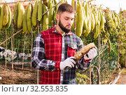 Купить «Farmer cleans dried angled luffa in the backyard of the farm», фото № 32553835, снято 29 октября 2019 г. (c) Яков Филимонов / Фотобанк Лори