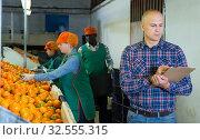 farmer controlling grading and packing of mandarin oranges performing by female workers. Стоковое фото, фотограф Яков Филимонов / Фотобанк Лори