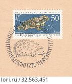 Купить «Европейская зелёная жаба (Bufo viridis), специальный почтовый штемпель Берлин охраняемые животные. Почтовая марка ГДР 1963 года», иллюстрация № 32563451 (c) александр афанасьев / Фотобанк Лори