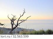Купить «Высохшее дерево на восходе солнца. Крым. Ай-Петри», фото № 32563599, снято 9 августа 2019 г. (c) Владимир Кошарев / Фотобанк Лори