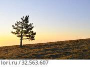 Купить «Одинокая сосна на восходе солнца. Крым. Ай-Петри», фото № 32563607, снято 9 августа 2019 г. (c) Владимир Кошарев / Фотобанк Лори