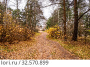 Купить «Path covered with orange-yellow leaves in a mixed autumn forest», фото № 32570899, снято 19 октября 2019 г. (c) Валерий Смирнов / Фотобанк Лори
