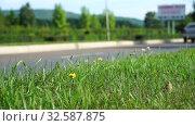 Купить «Car rides on road. Blurred background. Close up shot, focused on grass in foreground. Summer day, car traffic in provincial town. Handheld shoot near roadside», видеоролик № 32587875, снято 20 августа 2018 г. (c) Dmitry Domashenko / Фотобанк Лори