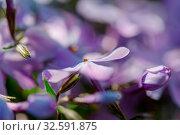 Купить «Close-up shot of the beautiful flowers. Suitable for floral background.», фото № 32591875, снято 23 февраля 2020 г. (c) easy Fotostock / Фотобанк Лори