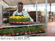 Florist arranging flowered Tagetes patula. Стоковое фото, фотограф Яков Филимонов / Фотобанк Лори
