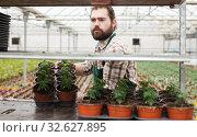 Купить «Young man gardener puts the pots of tomatoes seedling on the shelf», фото № 32627895, снято 9 апреля 2019 г. (c) Яков Филимонов / Фотобанк Лори