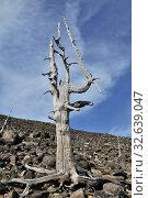 Купить «Старое мертвое дерево», фото № 32639047, снято 27 мая 2012 г. (c) Валерий Александрович / Фотобанк Лори