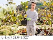 Купить «Young gardener caring for flowers in orangery», фото № 32648527, снято 8 ноября 2019 г. (c) Яков Филимонов / Фотобанк Лори
