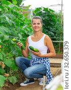 Купить «Smiling woman picking harvest of fresh cucumbers in sunny garden», фото № 32650379, снято 14 августа 2019 г. (c) Яков Филимонов / Фотобанк Лори