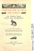 Familiar life in field and forest, the animals, birds, frogs, and salamanders : Mathews, F. Schuyler (Ferdinand Schuyler), 1854-1938. Редакционное фото, фотограф ARTOKOLORO QUINT LOX LIMITED / age Fotostock / Фотобанк Лори