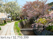 Купить «People walk along cherry trees on the Philosopher's Path. It is a pedestrian pathway that follows a cherry-tree-lined canal, between Ginkaku-ji and Nanzen-ji. Kyoto, Japan», фото № 32710399, снято 14 апреля 2013 г. (c) Кекяляйнен Андрей / Фотобанк Лори