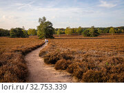 Купить «Westruper Heide, Muensterland, North Rhine-Westphalia, Germany», фото № 32753339, снято 14 октября 2019 г. (c) Caro Photoagency / Фотобанк Лори
