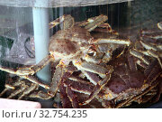 Купить «Hong Kong, China, king crabs in a water basin at the fish market in Lei Yue Mun», фото № 32754235, снято 9 декабря 2017 г. (c) Caro Photoagency / Фотобанк Лори