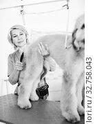 Купить «professional combing puppy in hairdresser», фото № 32758043, снято 17 октября 2017 г. (c) Татьяна Яцевич / Фотобанк Лори