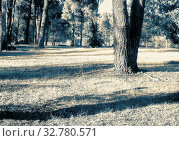 Купить «Landscape: Sunny meadow in the forest in early autumn. The effect of infrared film.», фото № 32780571, снято 4 июля 2020 г. (c) easy Fotostock / Фотобанк Лори