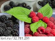 Купить «Blackberry and raspberry in containers close up», фото № 32781291, снято 23 августа 2019 г. (c) Короленко Елена / Фотобанк Лори