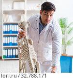 Купить «Doctor vet practicing on dog skeleton», фото № 32788171, снято 23 марта 2018 г. (c) Elnur / Фотобанк Лори