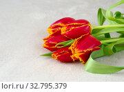 Букет красных тюльпанов на светлом фоне. Стоковое фото, фотограф Елена Коромыслова / Фотобанк Лори