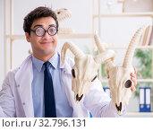 Купить «Funny crazy professor studying animal skeletons», фото № 32796131, снято 7 марта 2018 г. (c) Elnur / Фотобанк Лори
