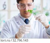 Купить «Male biochemist working in the lab on plants», фото № 32796143, снято 3 марта 2018 г. (c) Elnur / Фотобанк Лори