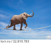 Elephant acrobat walking on the wire cord. Стоковое фото, фотограф Сергей Новиков / Фотобанк Лори
