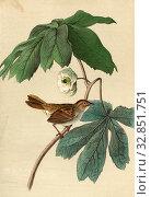 Swamp Sparrow - May-apple, Mud Warbler (Melospiza georgiana), Leaflets (Podophyllum), Signed: J.J. Audubon, J.T. Bowen, lithograph, Pl. 175 (vol. 3), Audubon... Редакционное фото, фотограф ARTOKOLORO QUINT LOX LIMITED / age Fotostock / Фотобанк Лори