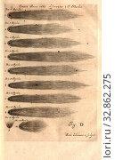 Купить «In 1665, a comet observed by J. Hevelio, Comet C / 1665 F1 in 1665, signed: author delineavit et sculpsit, fig. D, Hevelius, Johannes (del. et sc.), Johannes...», фото № 32862275, снято 4 июля 2020 г. (c) age Fotostock / Фотобанк Лори