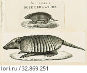 Dasypus sexcinctus, Print, Dasypus is the only extant genus in the family Dasypodidae. Its species are known as long-nosed or naked-tailed armadillos.... (2019 год). Редакционное фото, фотограф ARTOKOLORO QUINT LOX LIMITED / age Fotostock / Фотобанк Лори