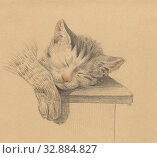 Купить «Head and leg of a sleeping cat, cat, Jean Bernard, 1775 - 1833, paper, pencil, chalk, h 140 mm × w 156 mm», фото № 32884827, снято 7 августа 2020 г. (c) age Fotostock / Фотобанк Лори
