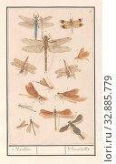 Dragonflies (Odonata), Naelden. / Demoiselles. (title on object), Sheet with fourteen dragonflies and damsels, numbered 1-14. Numbered top right: 9. Part... Редакционное фото, фотограф ARTOKOLORO QUINT LOX LIMITED / age Fotostock / Фотобанк Лори