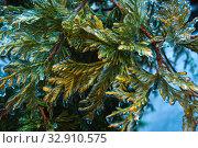 Природа подо льдом после ледяного дождя. Стоковое фото, фотограф Евгений Горбунов / Фотобанк Лори