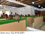 Doha, Qatar - Nov 21. 2019. Selling falcons in Waqif Souq market. Редакционное фото, фотограф Володина Ольга / Фотобанк Лори