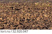 Купить «Agricultural land cultivated for sowing. Plowed field.», фото № 32920047, снято 22 сентября 2019 г. (c) Акиньшин Владимир / Фотобанк Лори
