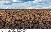 Купить «Agricultural land cultivated for sowing. Plowed field.», фото № 32920051, снято 22 сентября 2019 г. (c) Акиньшин Владимир / Фотобанк Лори