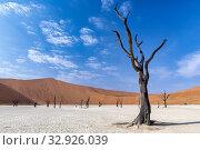 Купить «Namibia, Africa. Deadvlei. Namib Naukluft National Park.», фото № 32926039, снято 4 июня 2019 г. (c) age Fotostock / Фотобанк Лори