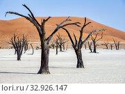 Купить «Namibia, Africa. Deadvlei. Namib Naukluft National Park.», фото № 32926147, снято 4 июня 2019 г. (c) age Fotostock / Фотобанк Лори