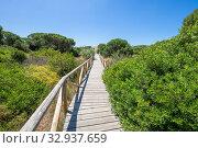 Купить «Landscape of footbridge with wooden planks between plants and trees in Natural Park of Trafalgar Cape, next to Canos Meca village (Barbate, Cadiz, Andalusia, Spain).», фото № 32937659, снято 31 мая 2018 г. (c) easy Fotostock / Фотобанк Лори