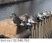 Купить «Flock of pigeons», фото № 32946763, снято 13 ноября 2012 г. (c) Argument / Фотобанк Лори