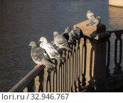 Купить «Flock of pigeons», фото № 32946767, снято 13 ноября 2012 г. (c) Argument / Фотобанк Лори