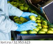 Купить «hands of factory worker checking apples on conveyor belt of sorting production line», фото № 32953623, снято 12 июля 2020 г. (c) Яков Филимонов / Фотобанк Лори